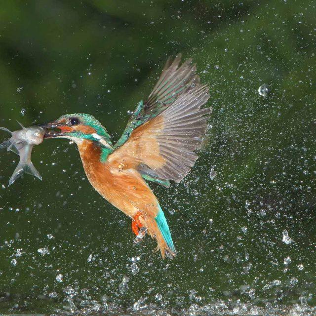 natuurfotografie-vogels-birds